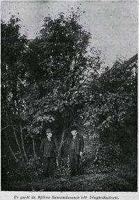 Trjárækt í Reykjavík, úr grein frá 1937 eftir Vigfús Guðmundsson